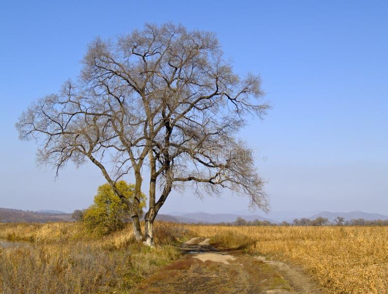 偏僻的老结构树 免版税库存图片