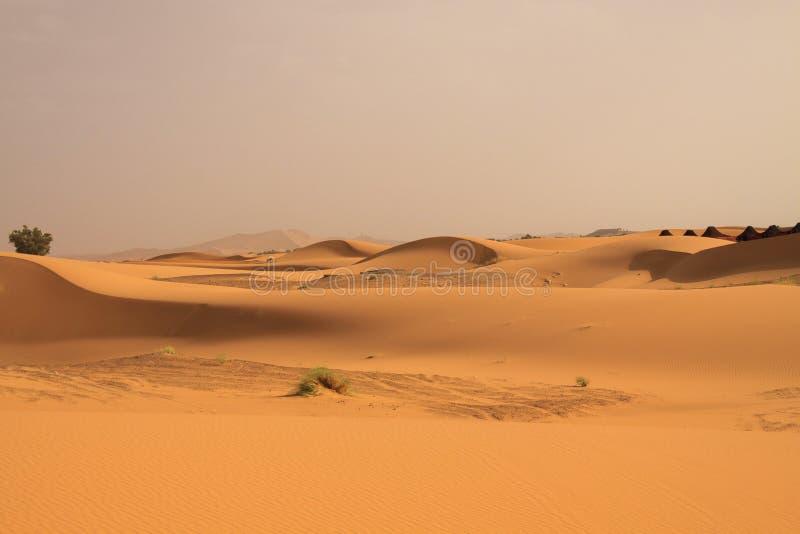 偏僻的被隔绝的沙丘传送带在尔格Chebbi,摩洛哥附近的撒哈拉大沙漠 免版税库存图片