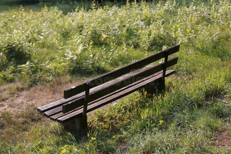 偏僻,空的长凳黑暗的木头,站立在草甸 免版税库存照片