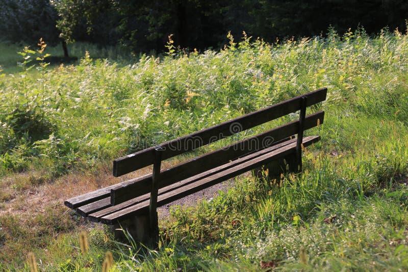 偏僻,空的长凳黑暗的木头,站立在草甸 免版税图库摄影