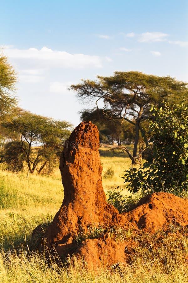偏僻termitary在大草原 坦桑尼亚,非洲 免版税库存图片