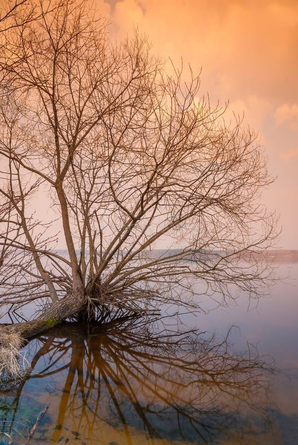 偏僻的光秃的树在水上 库存照片