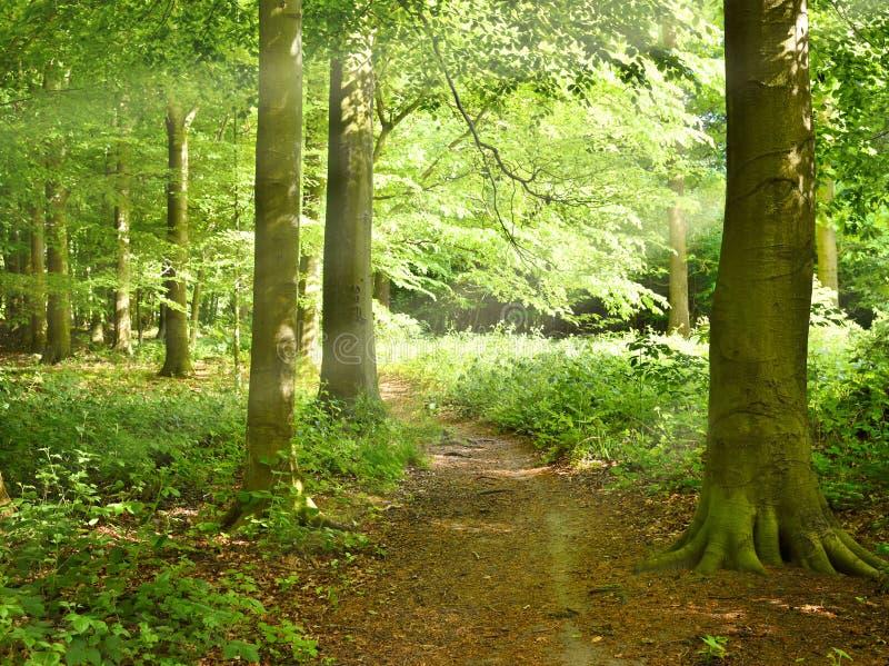 偏僻的小径通过森林 库存照片