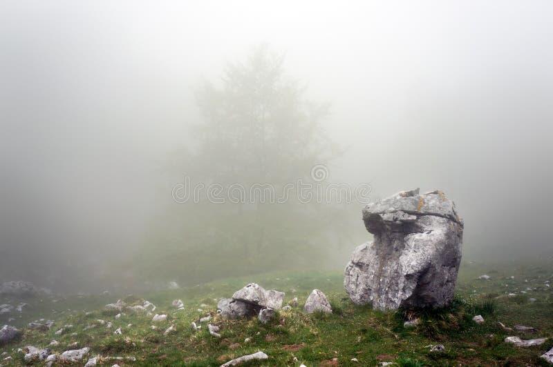 偏僻的岩石在森林里 免版税库存图片