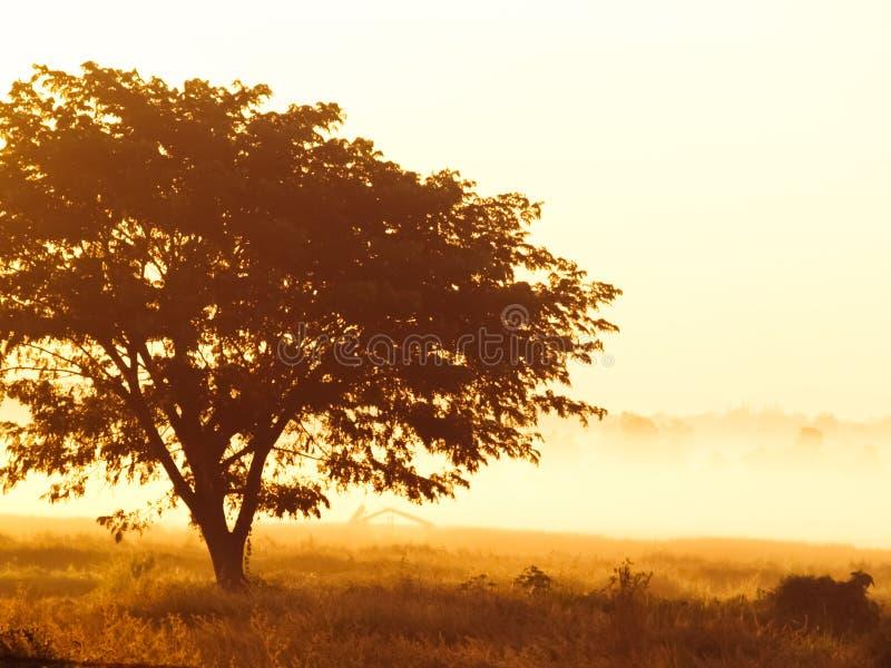 偏僻的树剪影在日出的与作为背景的薄雾 免版税库存照片