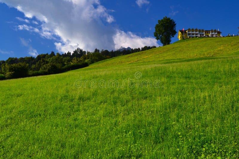 偏僻的树和大厦在青山顶部 免版税库存图片
