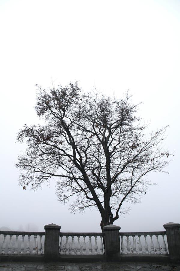 偏僻的树在早晨有雾的公园 库存照片