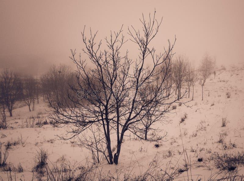 偏僻的树在有雾的天在冬天,减速火箭 免版税库存照片