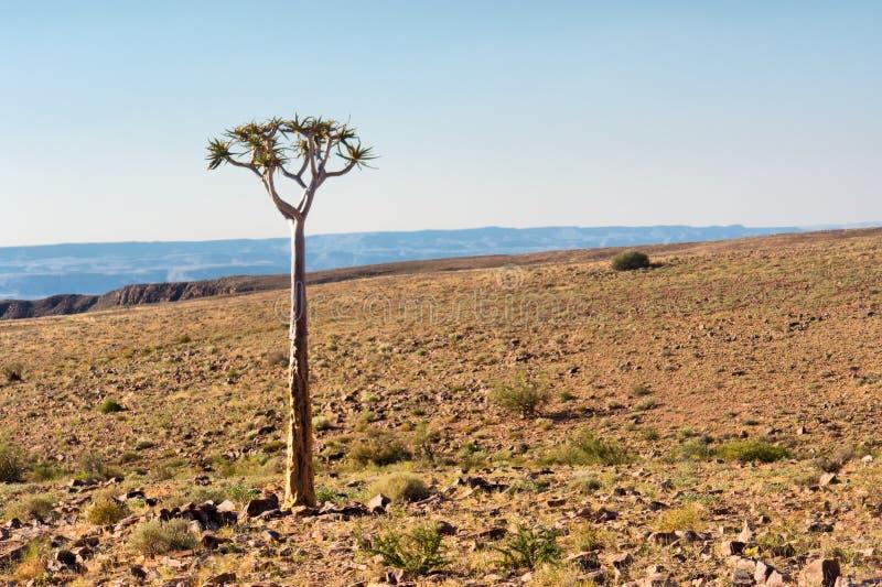 偏僻的树在石沙漠 图库摄影