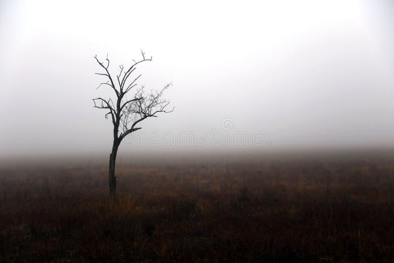偏僻的树在秋天天 免版税库存照片