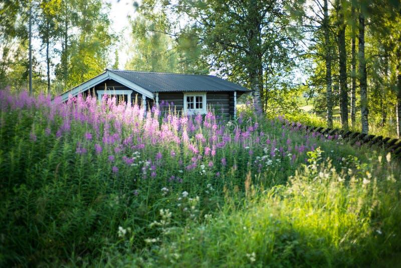 偏僻的浪漫房子在森林里 图库摄影