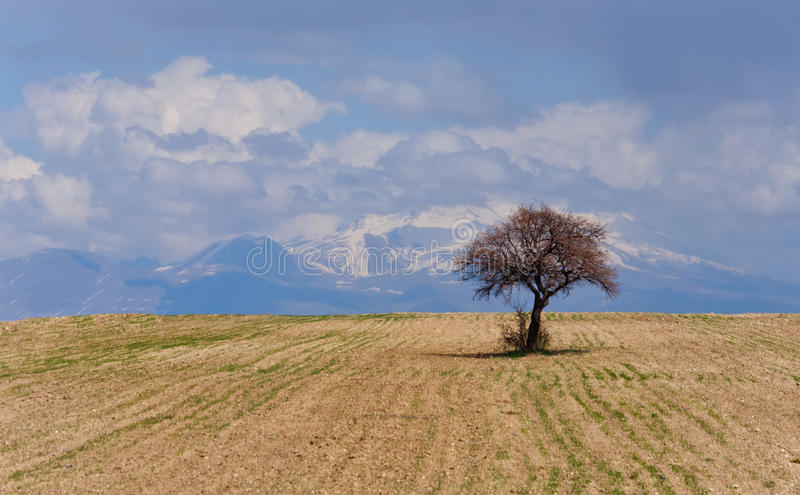 偏僻的金合欢树在多云天空的沙漠 库存图片