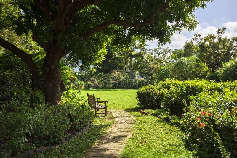 偏僻的长凳在一个植物园里 罗德城,托尔托拉岛 免版税图库摄影