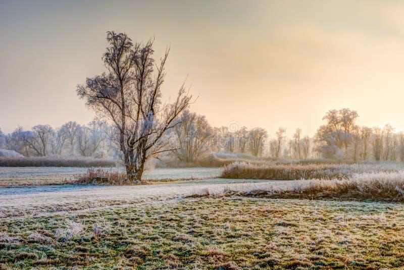 偏僻的结霜的树一个有雾的冬天晚上 免版税库存图片