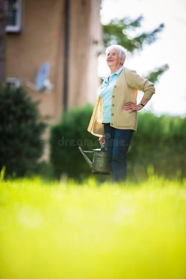做一些的资深妇女从事园艺在她可爱的庭院里 库存照片