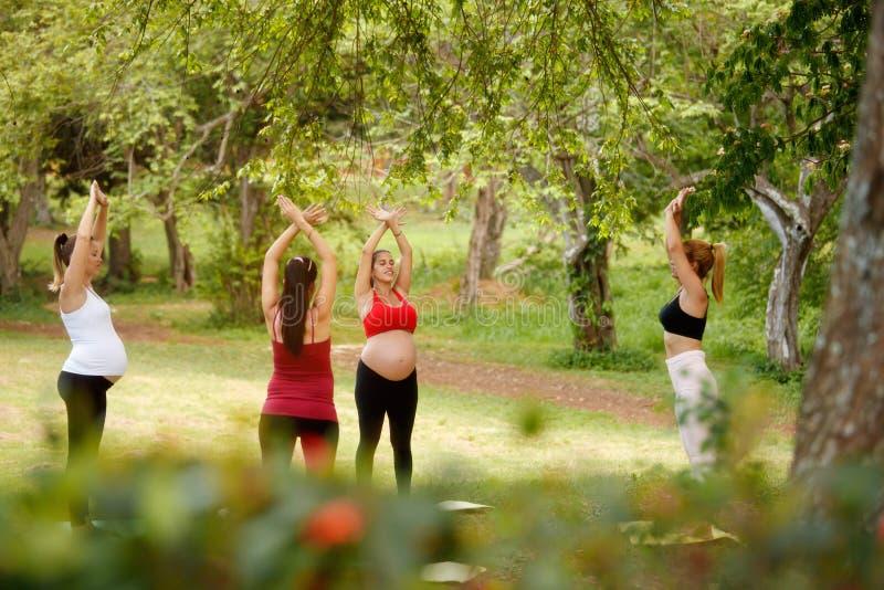 做与个人教练员的孕妇瑜伽在公园 免版税图库摄影