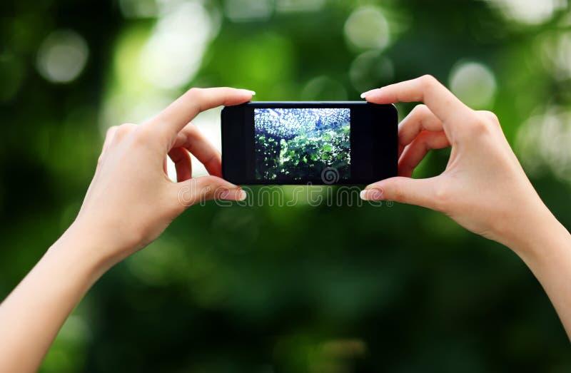 做与智能手机的女性手照片 库存图片