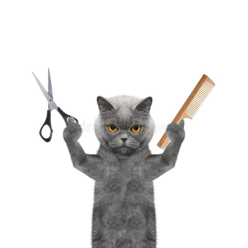 做修饰与剪刀和梳子的猫 免版税图库摄影