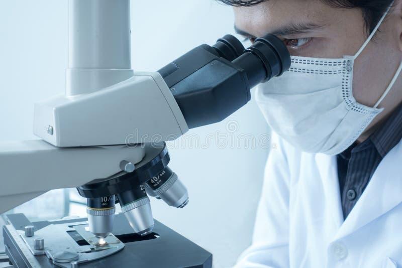 做化学测试样品的男性科学家显微镜,审查 实验室设备和科学实验 免版税库存照片