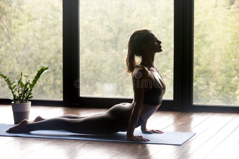 做向上饰面狗锻炼的年轻运动的妇女 库存照片