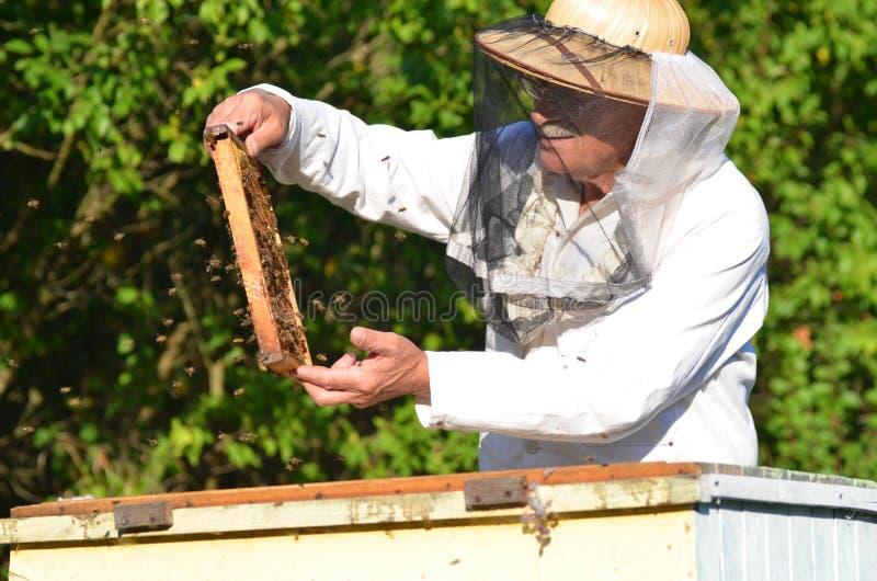 做在蜂房的老练的资深蜂农检查 免版税库存照片
