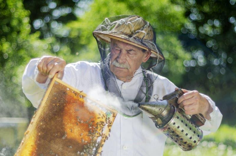 做在蜂房的资深养蜂家检查春天 库存图片
