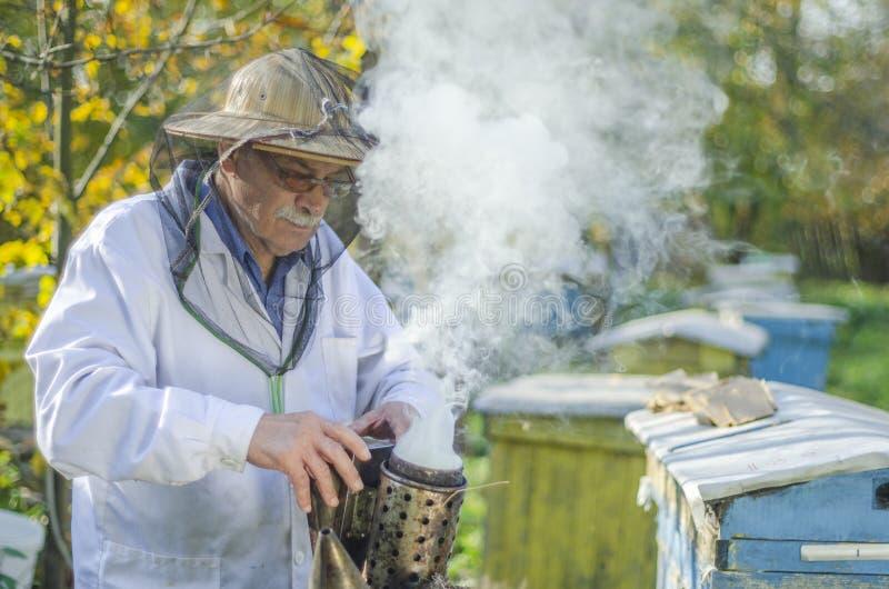 做在蜂房的资深养蜂家检查 免版税库存照片