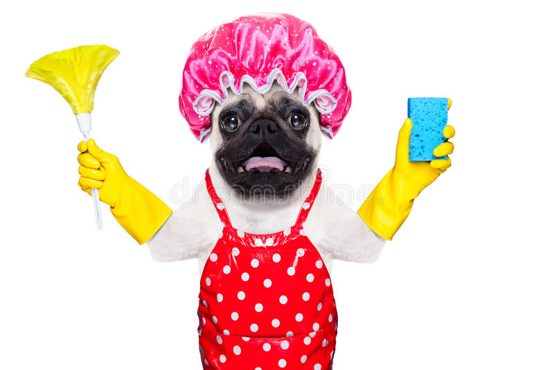做家务的狗 免版税库存照片