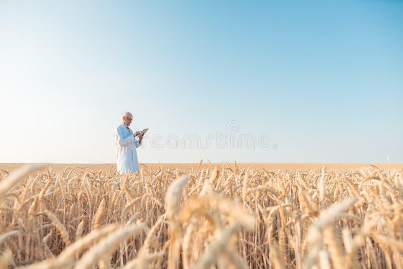 做对五谷测试领域trackin的农业科学家研究 免版税图库摄影