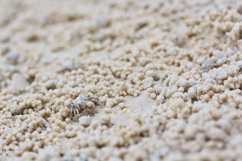 做沙子球的螃蟹 库存图片