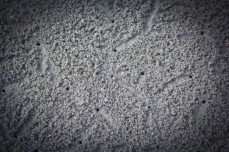 做沙子球的螃蟹 免版税库存照片
