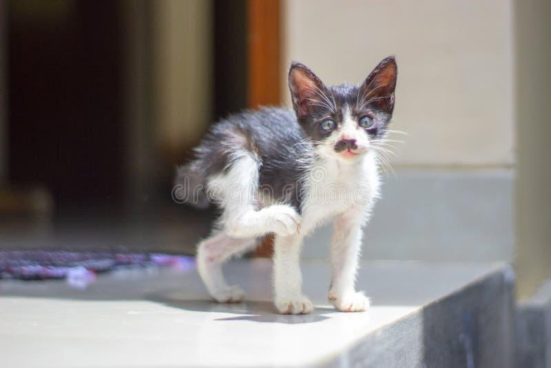 做瑜伽和看直接对照相机的小猫 免版税库存图片