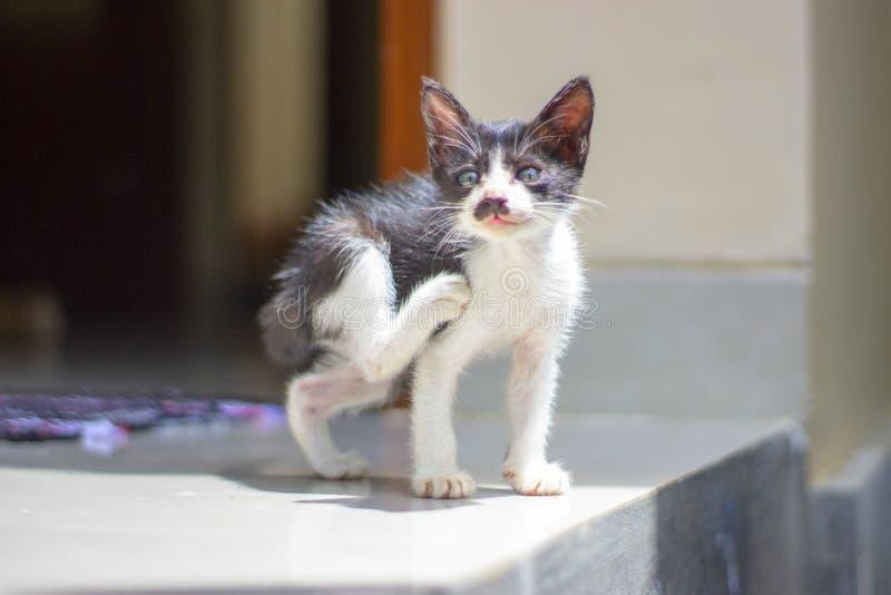 做瑜伽asana的小猫舒展腿 免版税库存照片