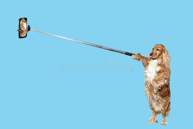 做自画象的狗 免版税库存照片