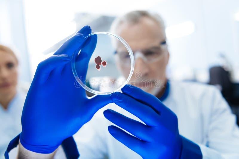 做血液分析的坚定的科学家 库存图片