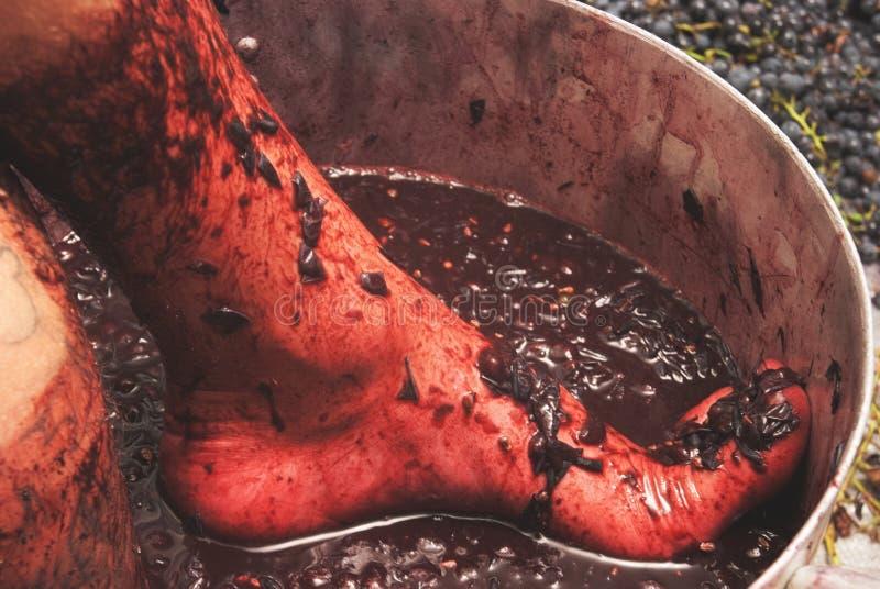 做酒的过程,葡萄按他们的在一个大大桶的脚 葡萄酒酿造、准备葡萄和汁液萃取物秘密  库存图片