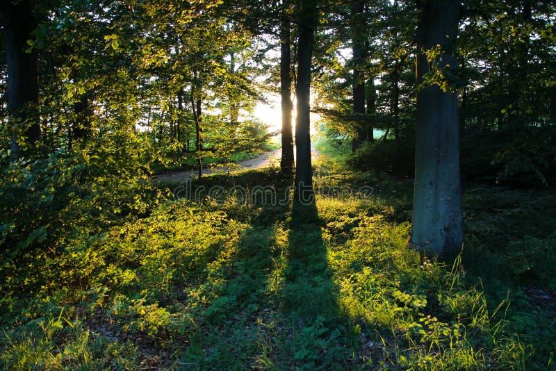 做阴影的树 免版税图库摄影