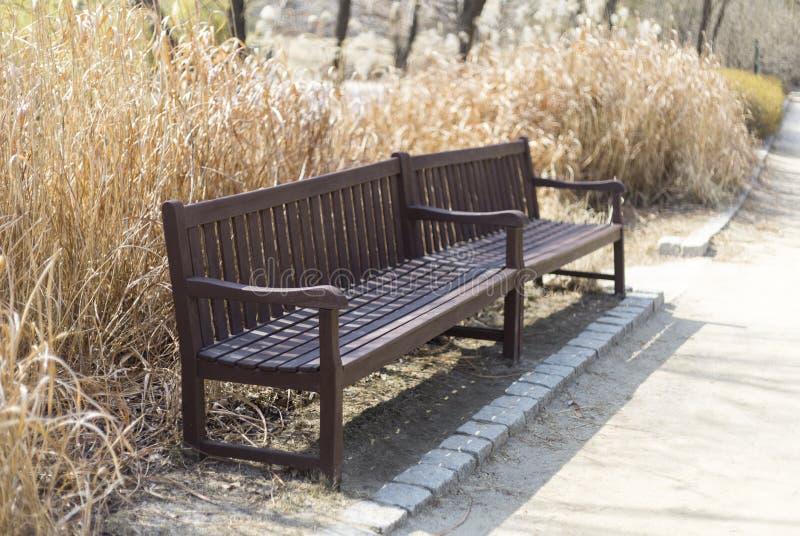 停放在blured长凳和在芦苇,美丽的五颜六色的秋天公园附近在晴天 库存图片