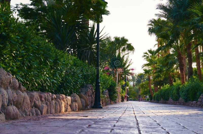 停放胡同被铺石瓦片、绿色棕榈和灌木沿路 库存图片