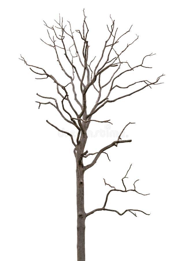 停止和干燥结构树在白色查出 库存图片