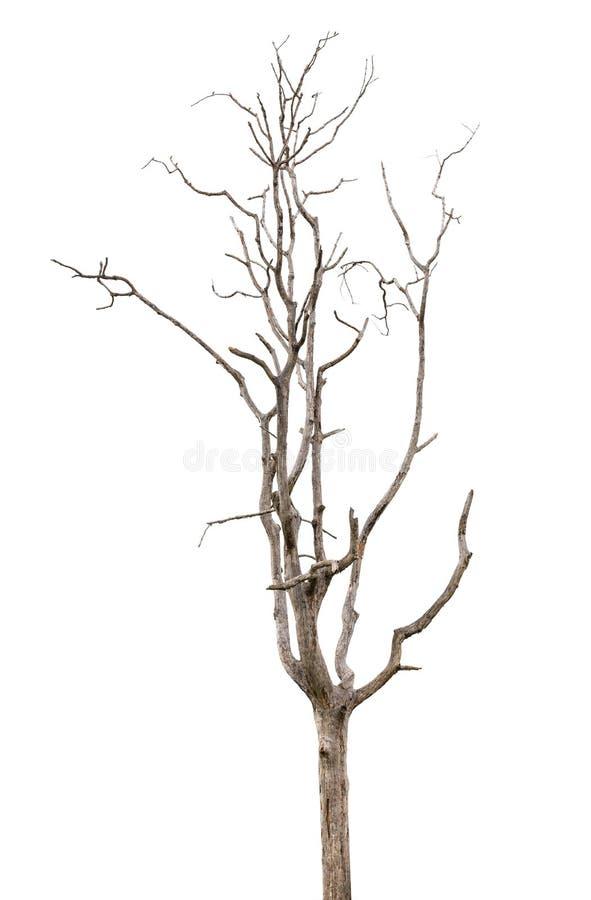 停止和干燥结构树在白色查出 图库摄影
