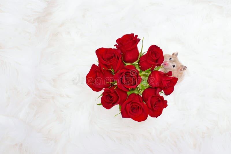 停止并且嗅到玫瑰概念 免版税库存照片
