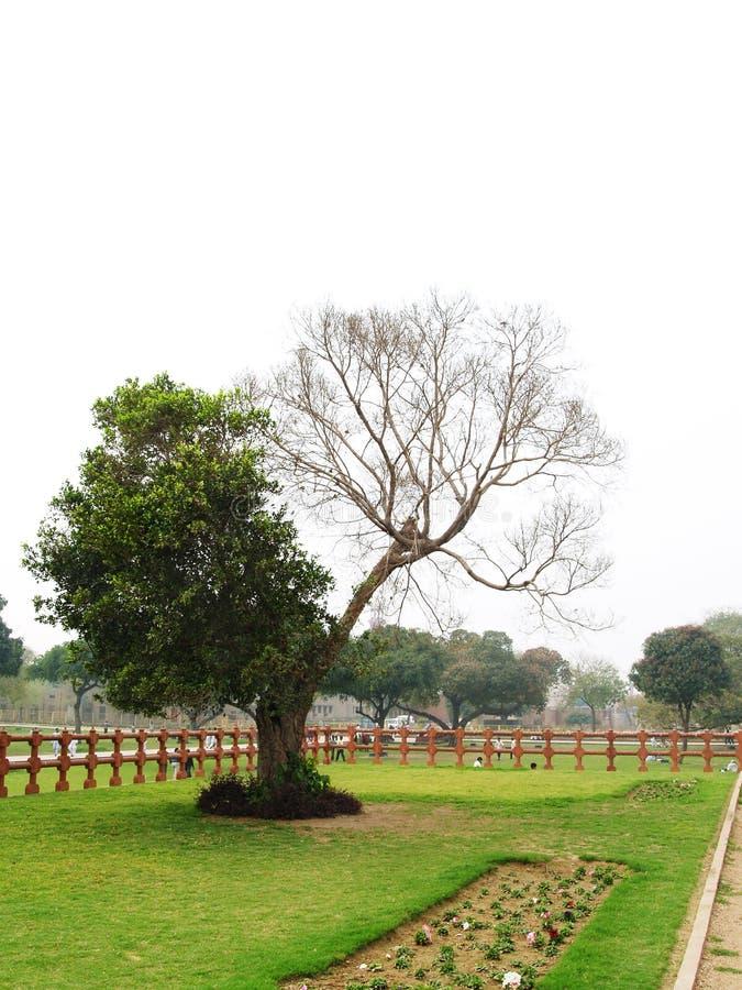 停止的半结构树 库存照片