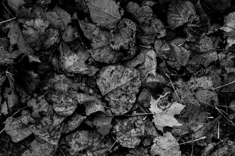停止的叶子 免版税图库摄影