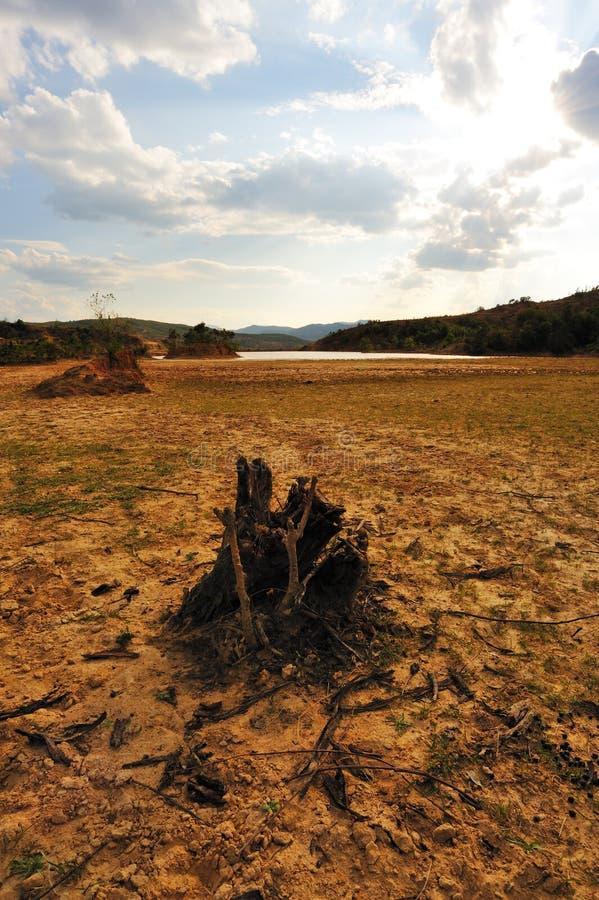 停止的干域根结构树 免版税库存图片