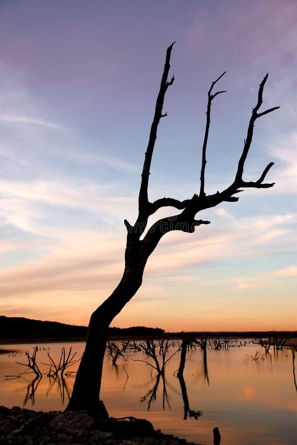 停止的日落结构树 库存图片