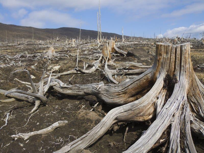 停止的木头 库存图片