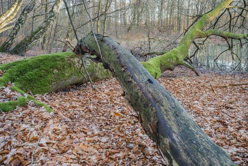 停止的木头 免版税库存照片