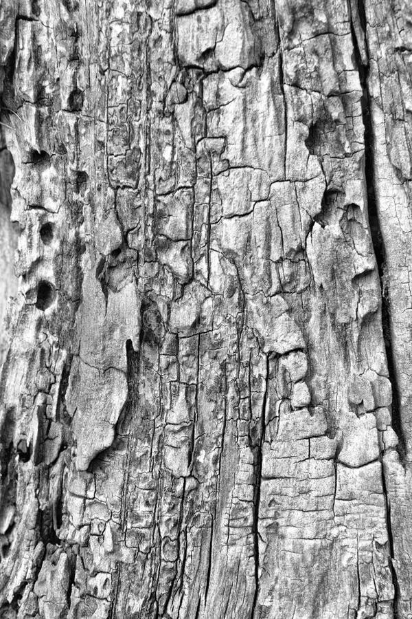 停止的树干 库存图片