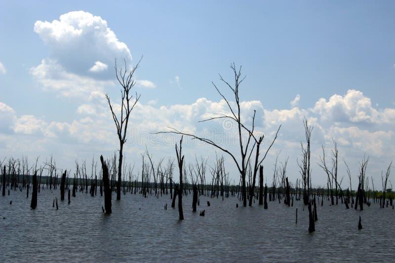 停止的森林 库存图片